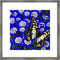 Yellow And Black Butterfly Framed Print
