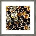 Honey Bees On Honeycomb Framed Print