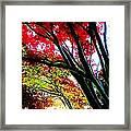 12032013003 Framed Print