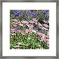 Background Of Colorful Flowers Framed Print