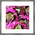 Schizanthus From The Hit Parade Mix Framed Print