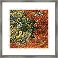 autumn colours in Bavaria Framed Print
