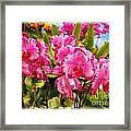 Beautiful Array Of Purple Butterfly Orchids Framed Print