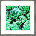 Broccolo Framed Print
