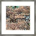 Cherry Blossoms In Pink And Brown Framed Print