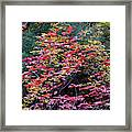 Colorful Leaves On A Tree Framed Print