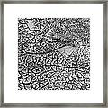 Dried Mud Pan It Time Of Drought Framed Print by Alexandr  Malyshev