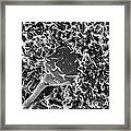 Fertilization Sem Framed Print