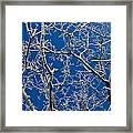 Frozen Tree Branches   In  Winter Framed Print