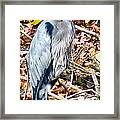 Great Blue Framed Print