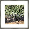 Lorimar Grapes Framed Print