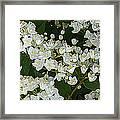 Momoko Framed Print