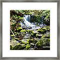 Mt Field National Park Framed Print