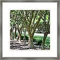 Norfolk Botanical Garden 6 Framed Print