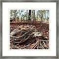 Northern Pine Snake Framed Print