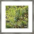 Pandanus Palm Tree Framed Print