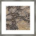 Patterns In Dolostone Coastal Rocks Framed Print