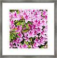 Pretty In Pink - Spring Flowers In Bloom. Framed Print