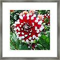 Red And White Flower Framed Print