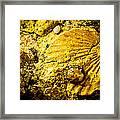 Seashell In Stone Framed Print