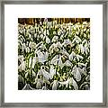 Snowdrop Woods Framed Print