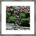 Pink Rose Garden Framed Print