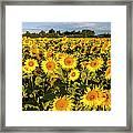 Sunflowers At Dawn Framed Print