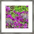 2 Tree Nymph Butterflies Framed Print