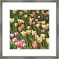 Tulips At Dallas Arboretum V92 Framed Print
