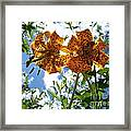 Two Tigers 'n' Sky Framed Print
