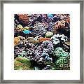 Underwater View Framed Print