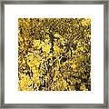 Yellow Spring Framed Print