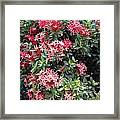 Antigua Flowers Framed Print
