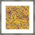 Bull Kelp Blades On Surface Background Texture Framed Print
