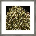 Christmas Tree Ornaments Faneuil Hall Tree Boston Framed Print
