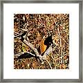 Eastern Fox Squirrel Framed Print
