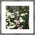 Flower Garden Framed Print by Yvette Pichette