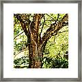 Kingdom Of The Trees. Peradeniya Botanical Garden. Sri Lanka Framed Print