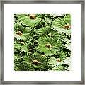 Russian Silverberry Leaf Sem Framed Print