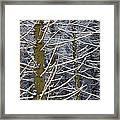 Snow Covered Trees Framed Print