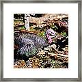 Wild Turkey Framed Print by Thea Wolff