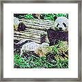 3722-panda -  Watercolor 2 Sl Framed Print