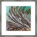 Bull Kelp Blades On Surface Background Texture Framed Print
