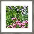 Chives In Bloom Framed Print