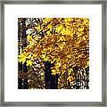 Fall Yellow Framed Print