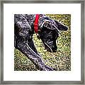 Murphy Framed Print by Ann Butler