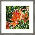 Orange Lilium Framed Print