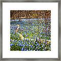 Spring Blue Flowers Wood Squill Framed Print
