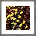 Sunflower From The Color Fashion Mix Framed Print