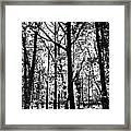 The Forest Framed Print